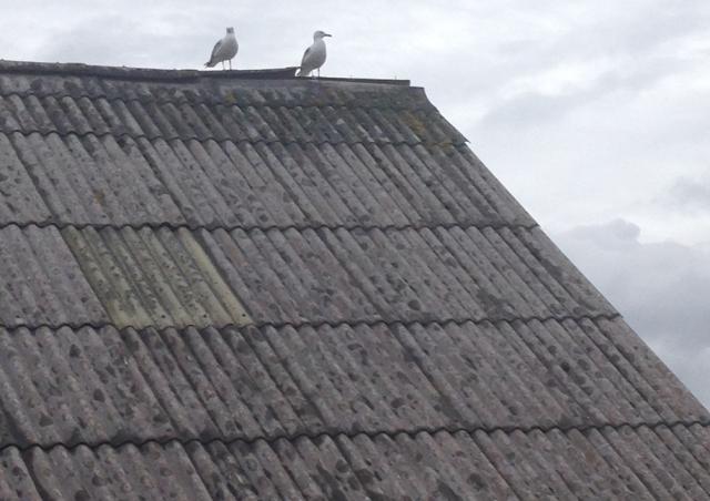 roof 1 - Mark L'Argent - Lettering Artist